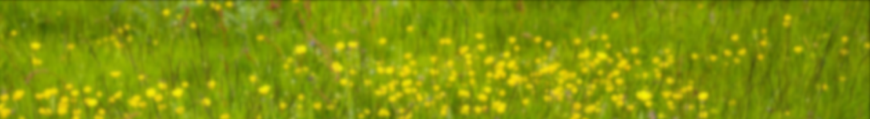 Krotzebojer Grüne