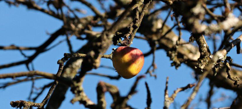 Grüne Äpfel für die Jugend